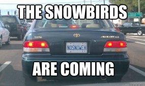 snowbirds%20meme